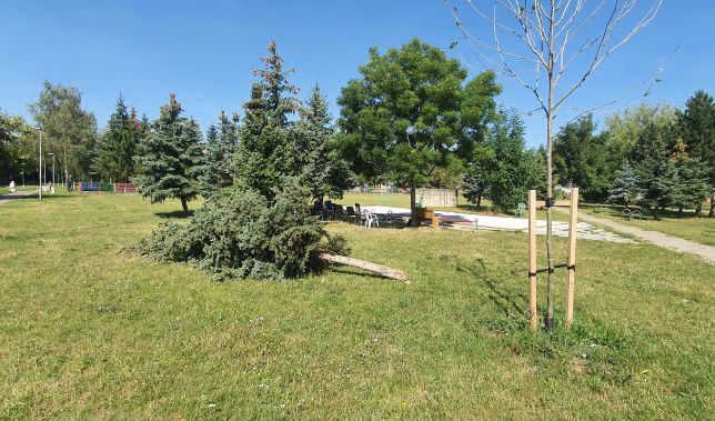 vypileny strom partizanske